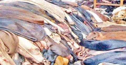 হেফাজতিদের মাদ্রাসায় কোরবানির পশুর চামড়া দান করা জায়েজ হবে না